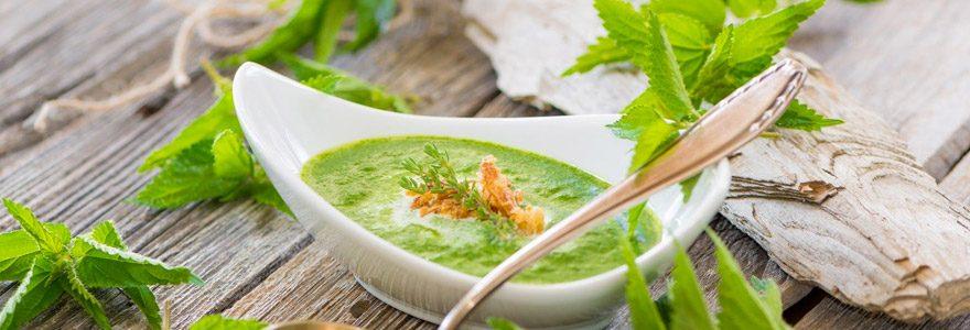 Santé et bien être : comment se soigner avec les plantes ?